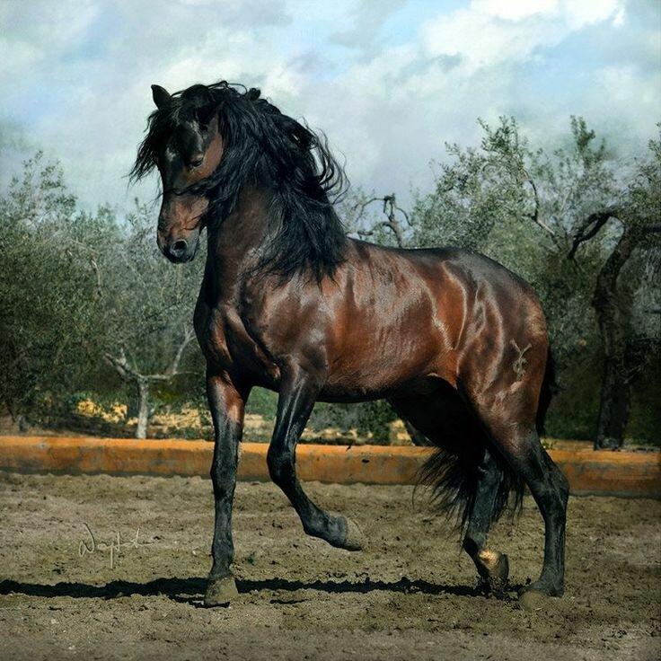 На данном изображении может находиться: небо, лошадь, облако, на улице и природа