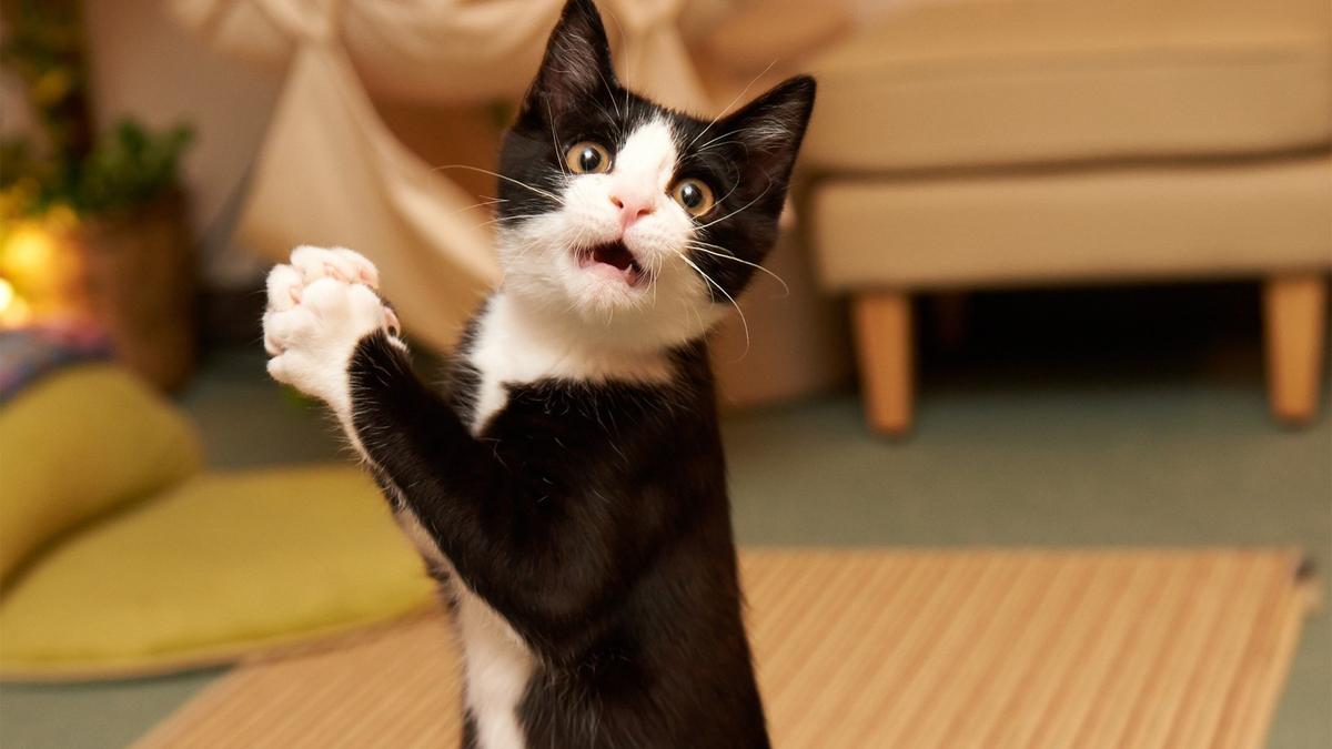 Лучшего, картинки котомания