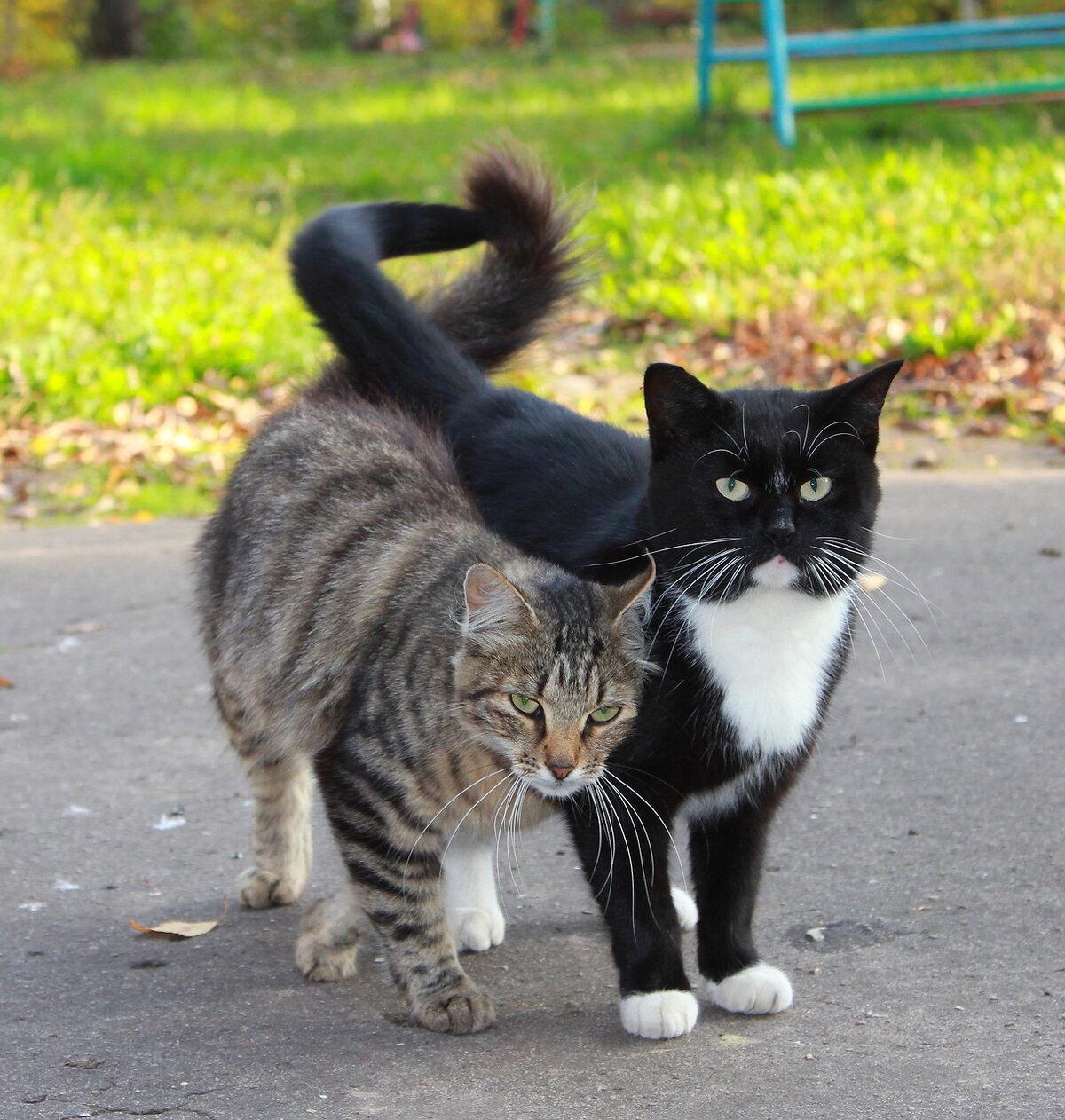 Кот и кошка картинки любовь, благодарностью спасибо