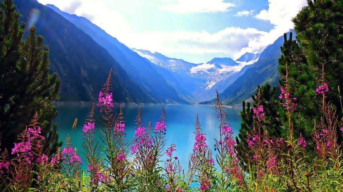 Цветы пейзажи картинки