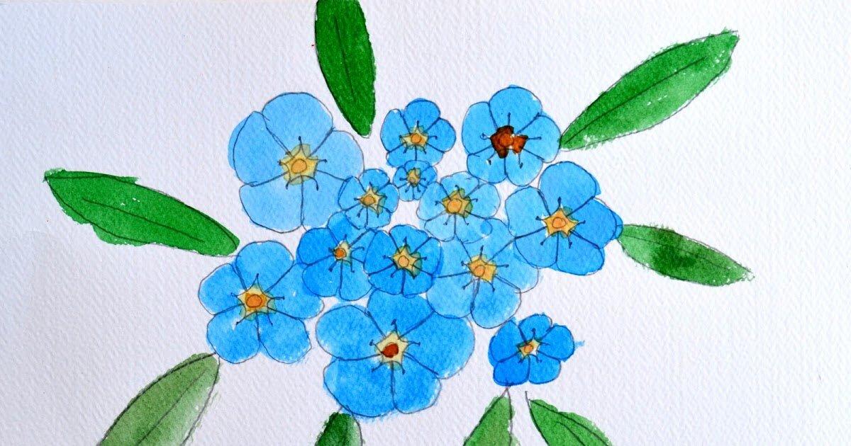 Картинки незабудки цветы нарисованные