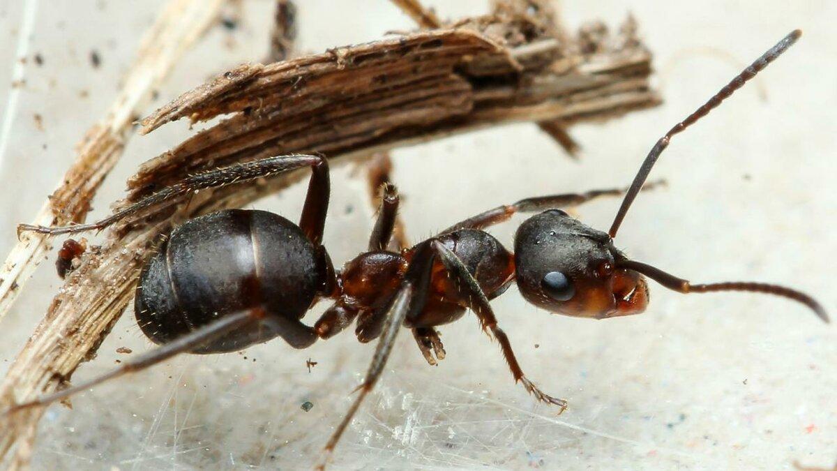 Картинки трудяга муравей