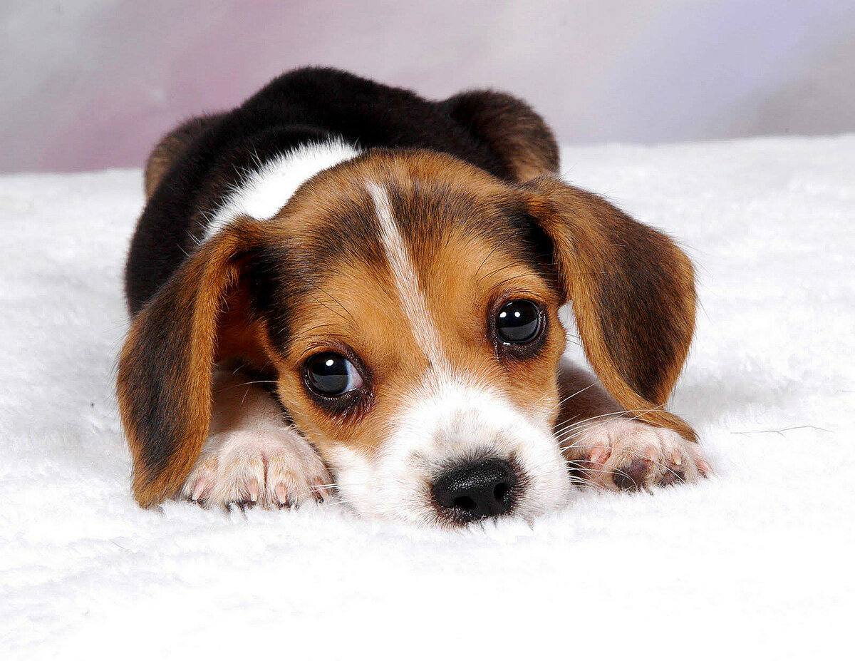 Картинки про собак, очень