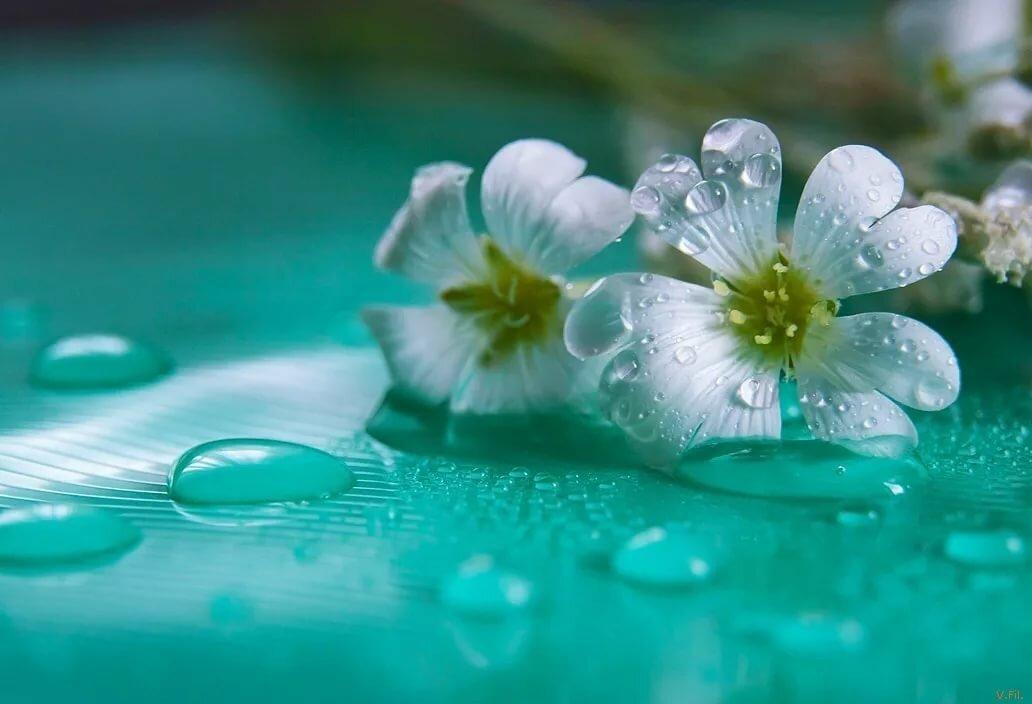 картинки нежность воды около акриловая