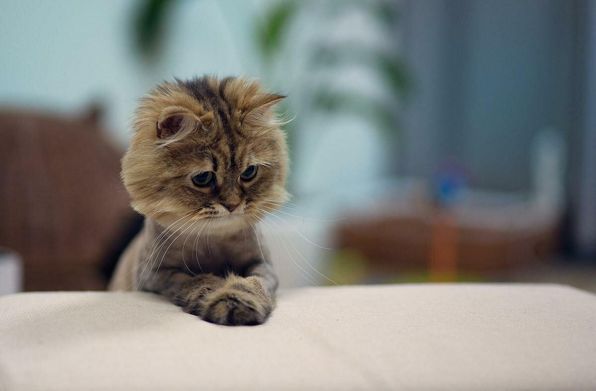 Картинки, милые картинки котят с надписями