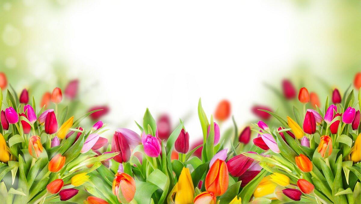 Фон открытка цветы, прикольные