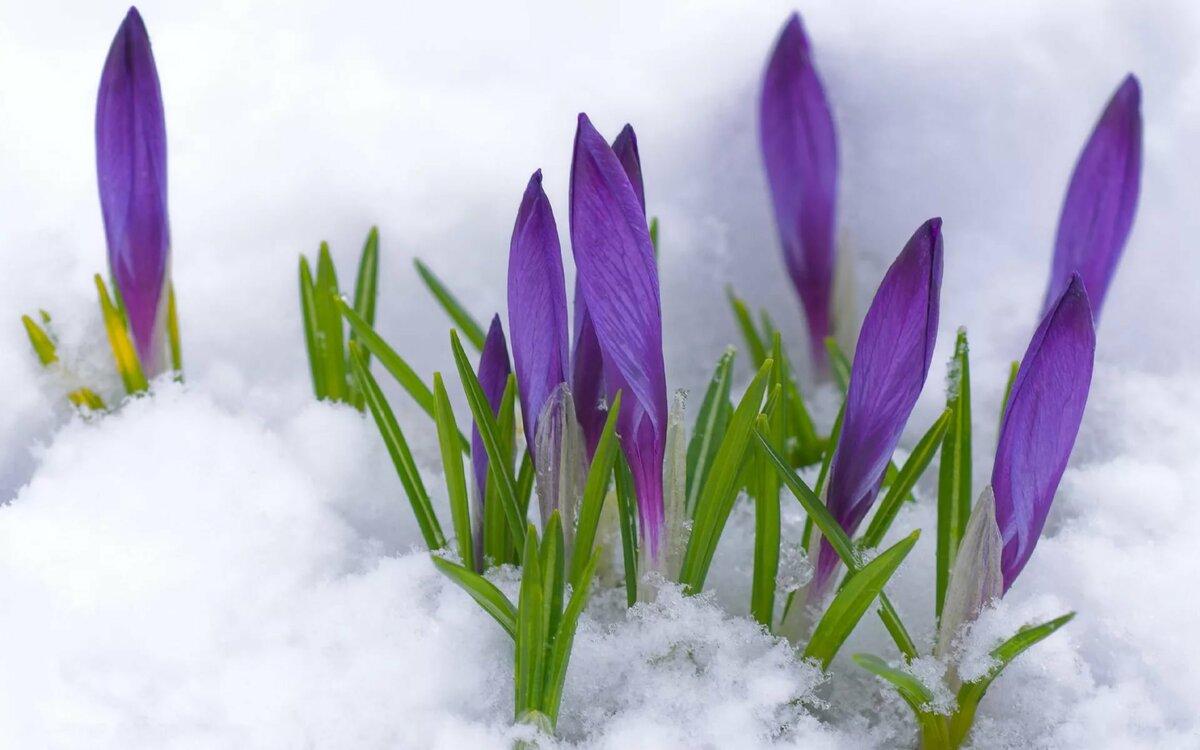 Для, открытки весна фото