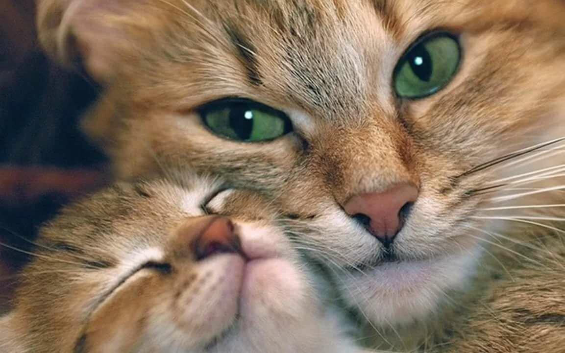 День, прикольные картинки с животными любимой