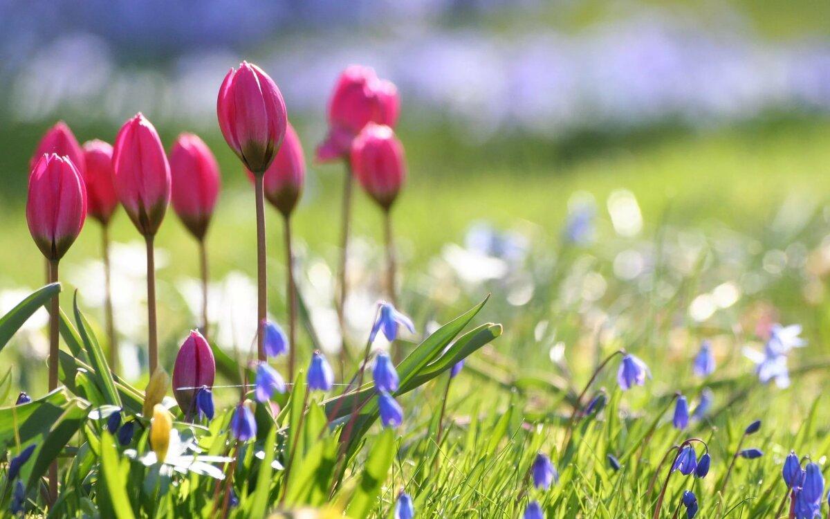 Картинки малышах, красивая весна картинки на рабочий