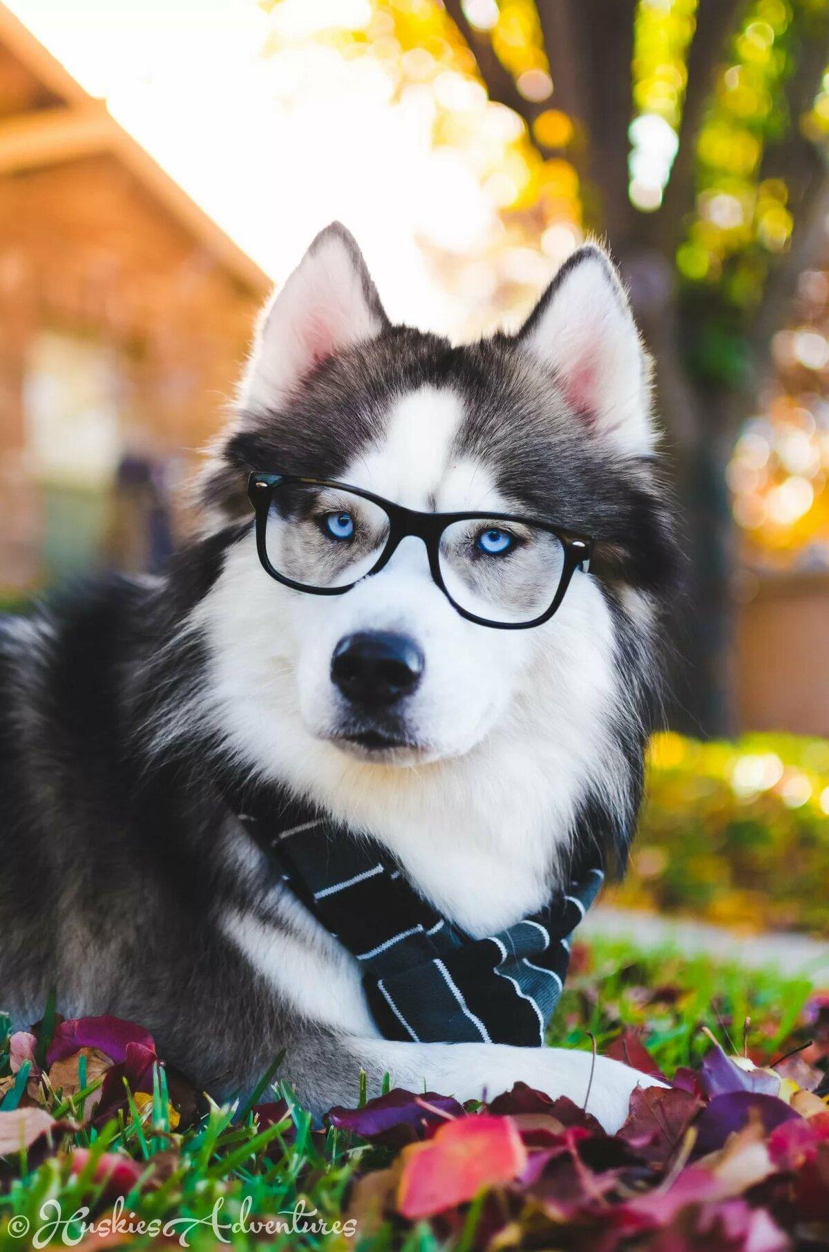 картинки собачки крутые словам комика, подобные