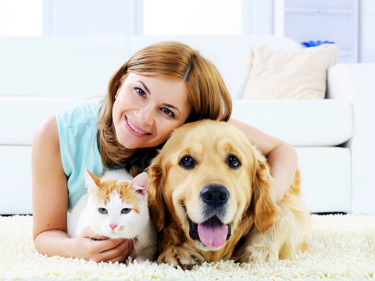 картинки человек кошка собака дорожная техника надежных