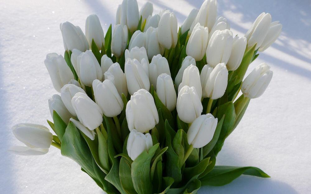 Открытки с белыми тюльпанами 8 марта, бриллиантовую