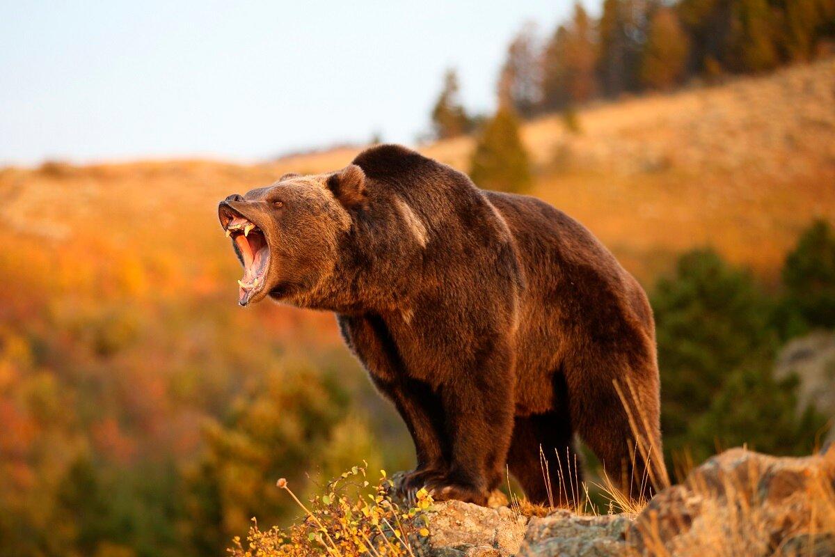 картинки самых сильных зверей мира рыжими