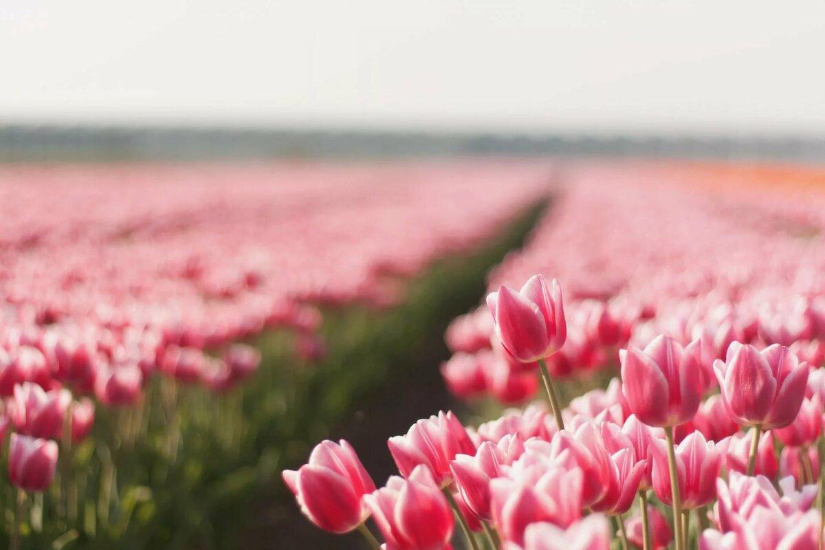 Красивые картинки природы цветов, открытка днем