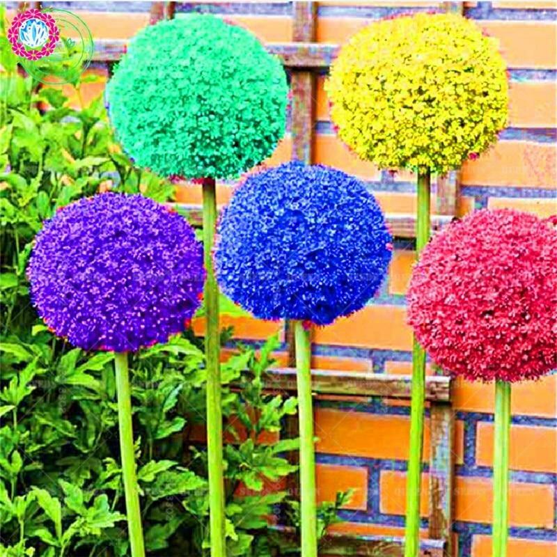 Интернет магазин редких уличных цветов и растений