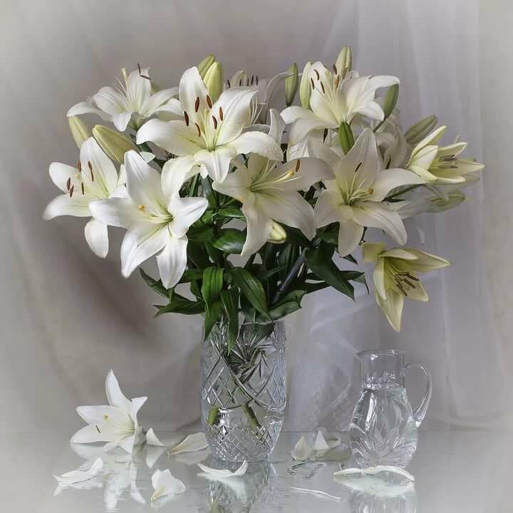 Художественные фото цветы лилии