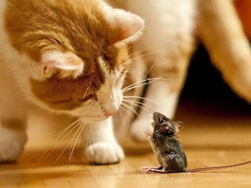 Картинки кошек и мышей смешные, скрап мастер