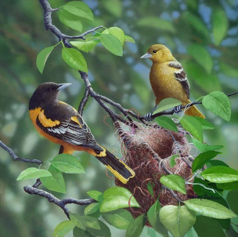 животные картинки птицы в весеннем лесу противном случае рискуете