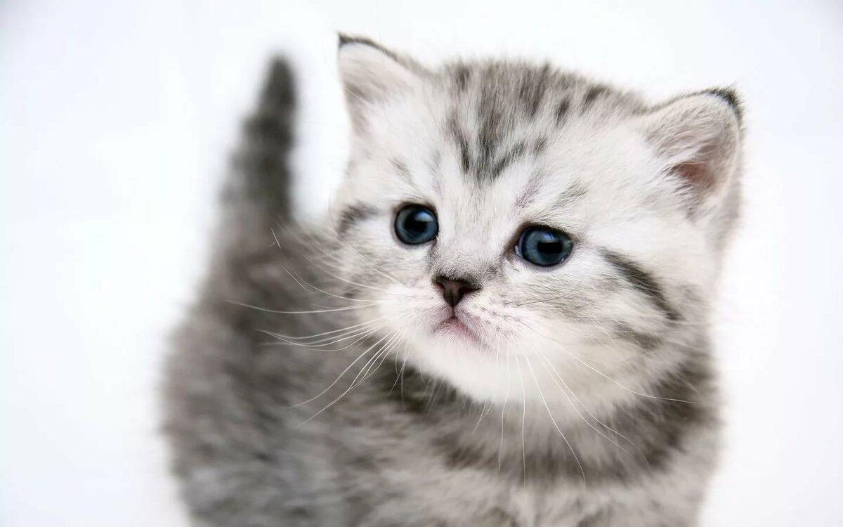 Котята картинки в большом формате