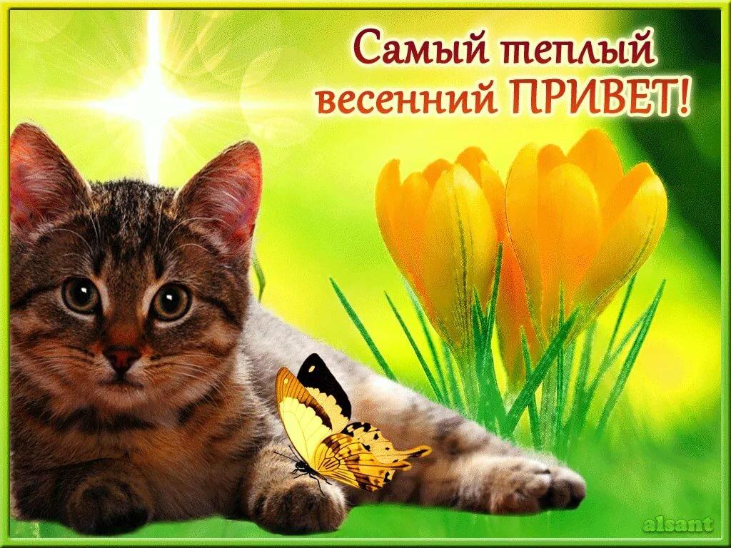 Флеш открытки о весне