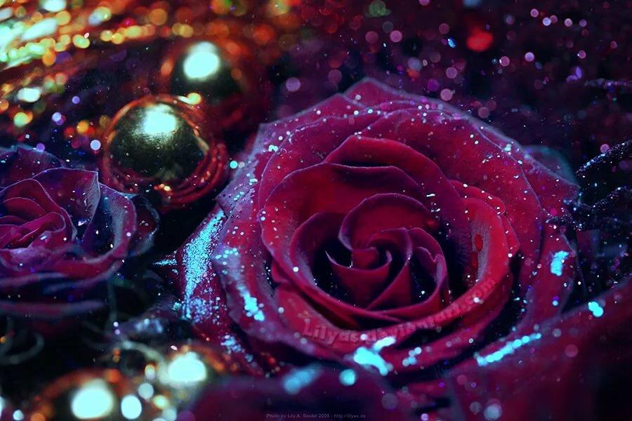 Картинки розы блестящие