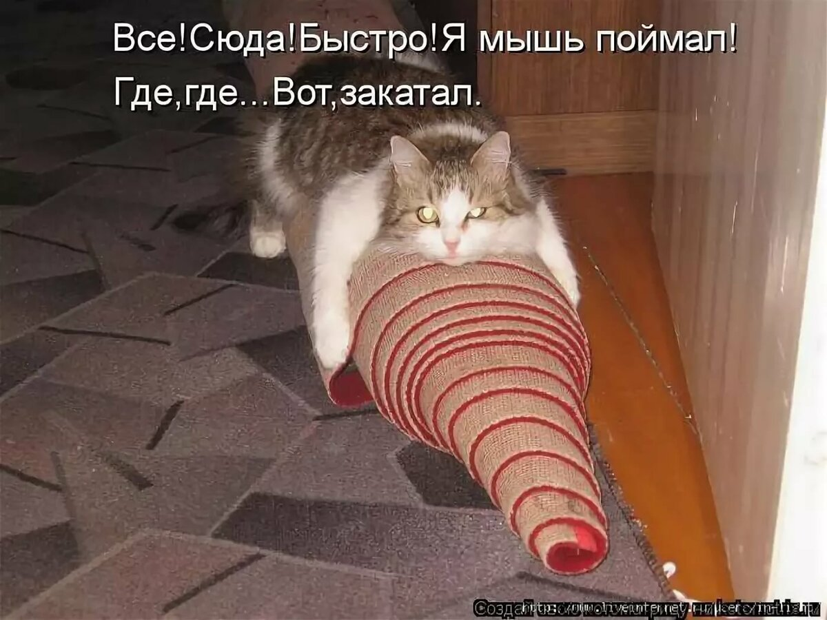 Прикольные картинки с котами и надписями