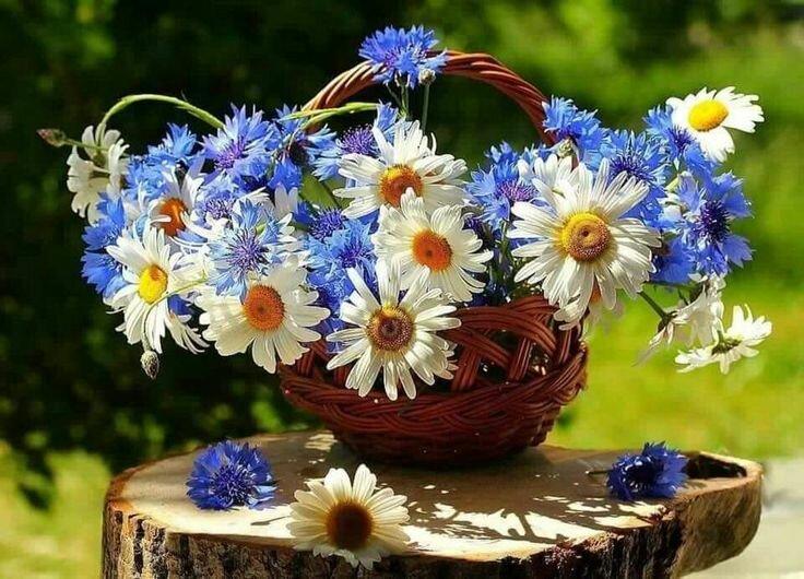 Открытка полевыми цветами, для мамы