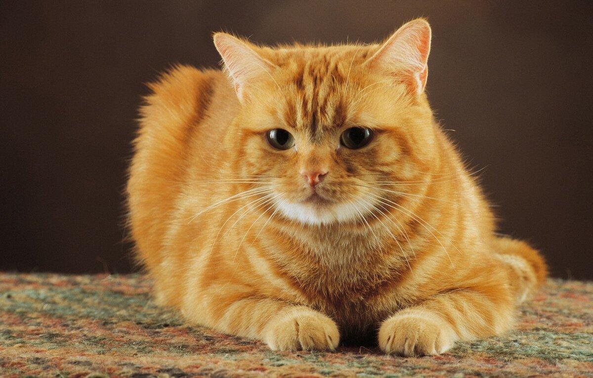 Картинки про кошек на рабочий стол