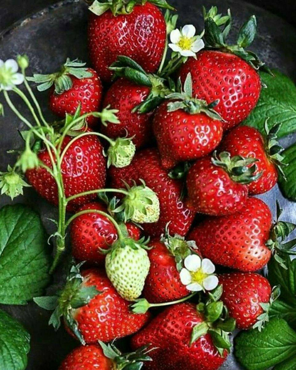 Домашняя ягодница клубника и земляника в Зернограде