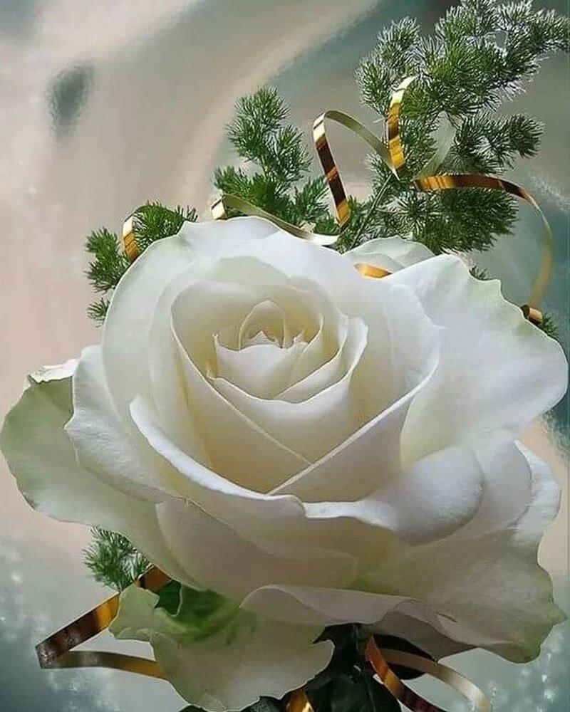Рисованные, открытка цветы татьяне