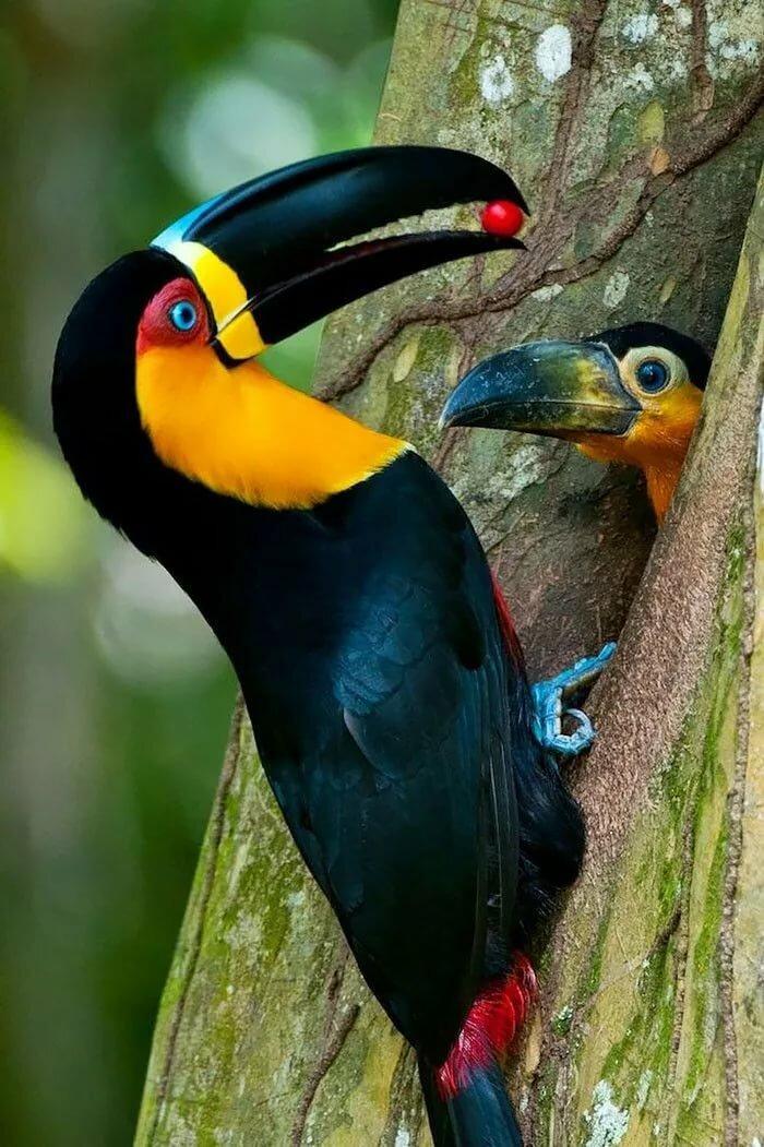 Птицы в мире картинки