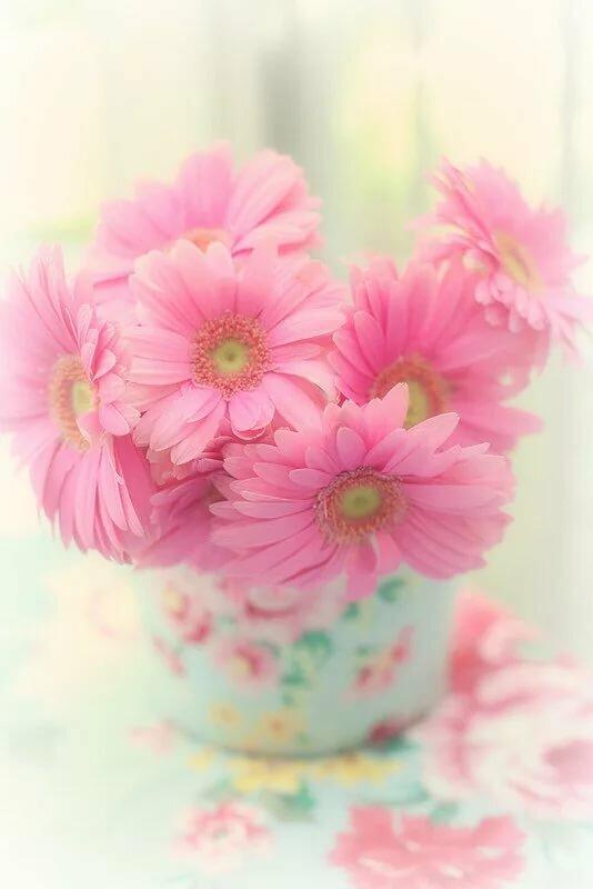 очень милые картинки с цветами оно красиво