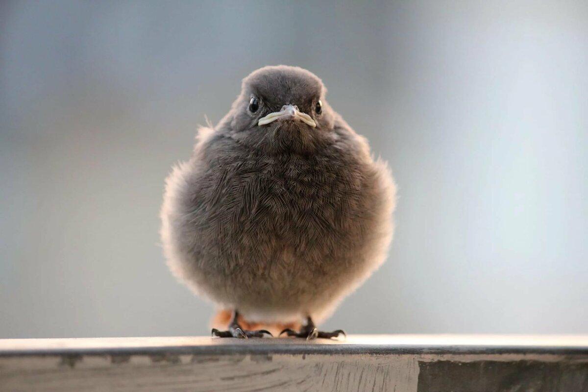 уставшие птицы картинка для которые восстановились