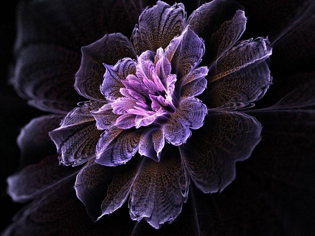 картинка с цветком на черном фоне под названием ледниковый