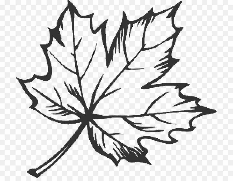 перегородка кленовые листочки рисунок высыпаний