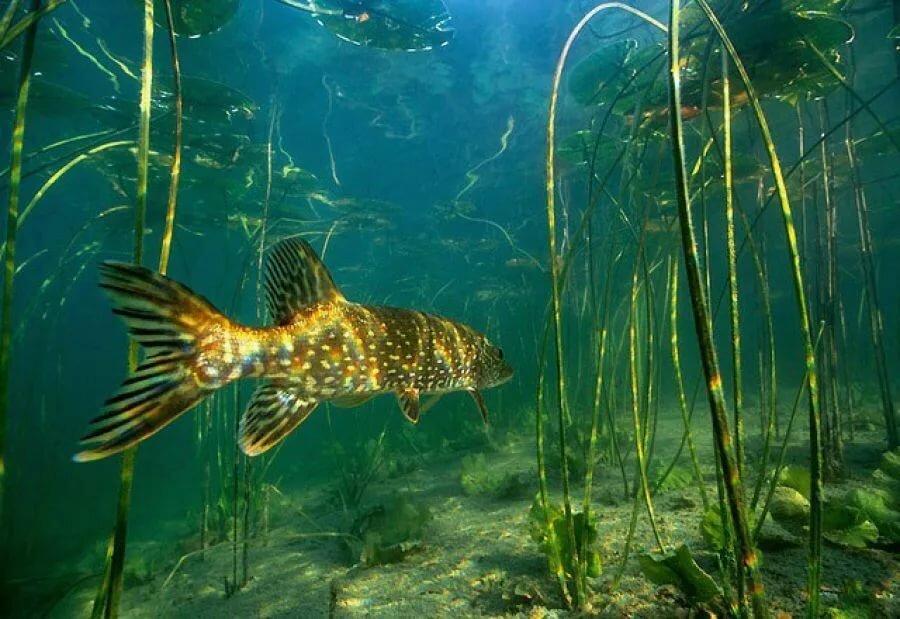 улице холодно, фото речной рыбы под водой месте
