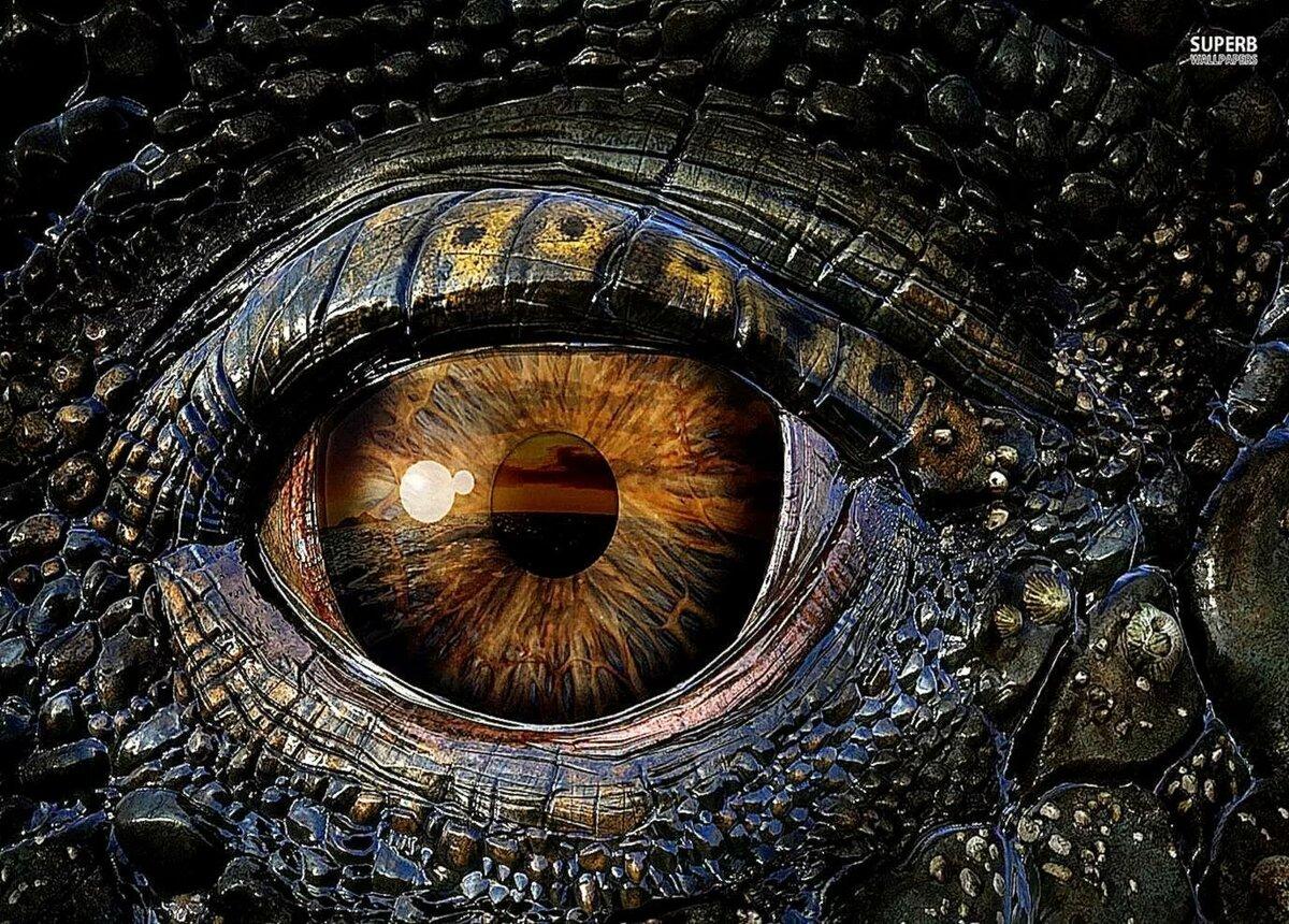 материал глаз дракона фото словам знакомых