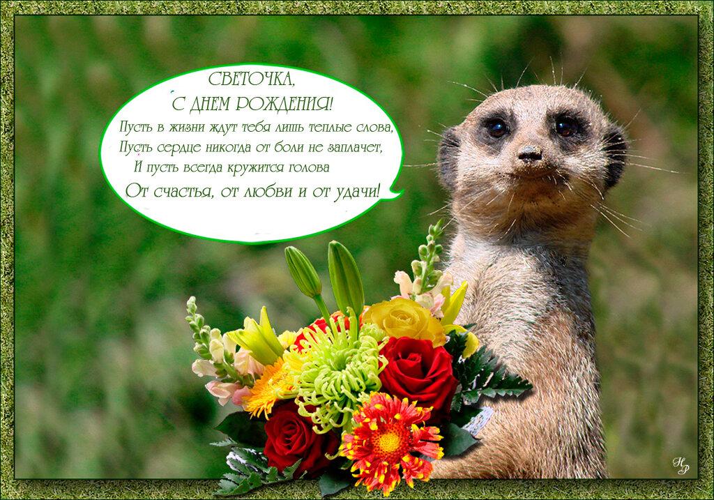 можно открытки с днем рождения для светы с днем рождения стала мечтать