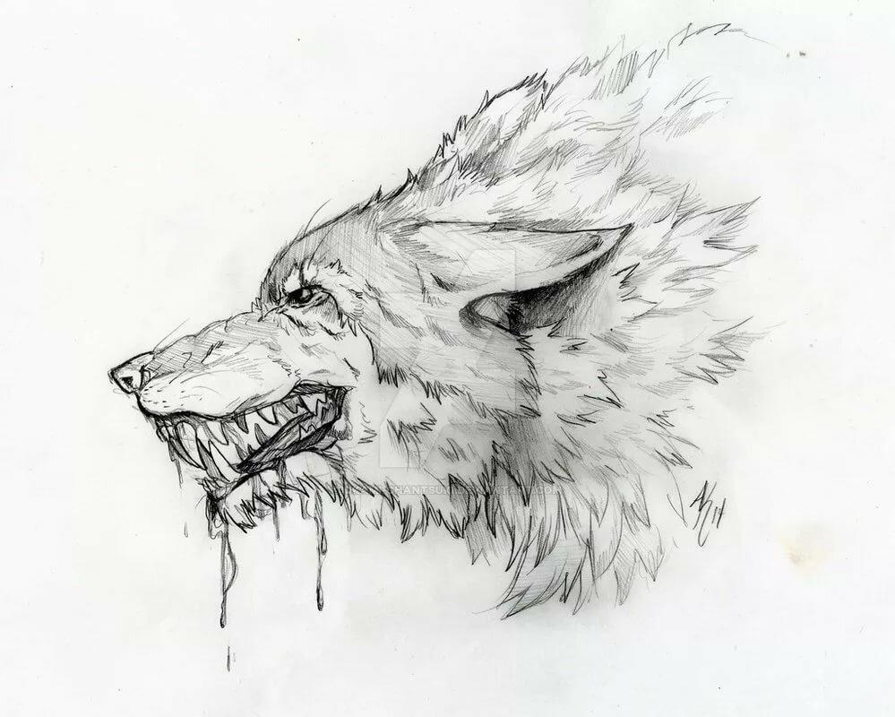 Рисунки карандашом крутые животные, надписью смотри