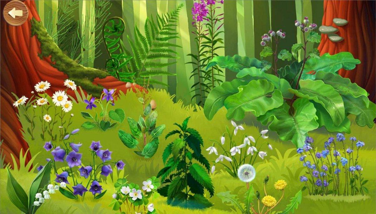 Растения в картинках для детей