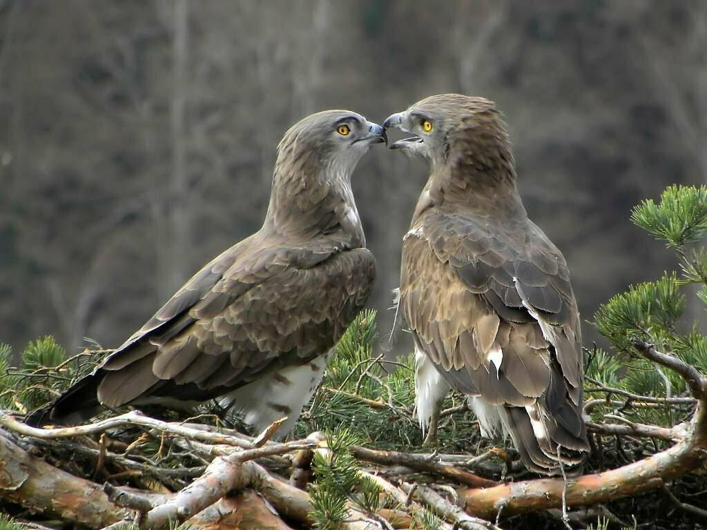 как скопировать фотографии хищных птиц тильда дед мороз