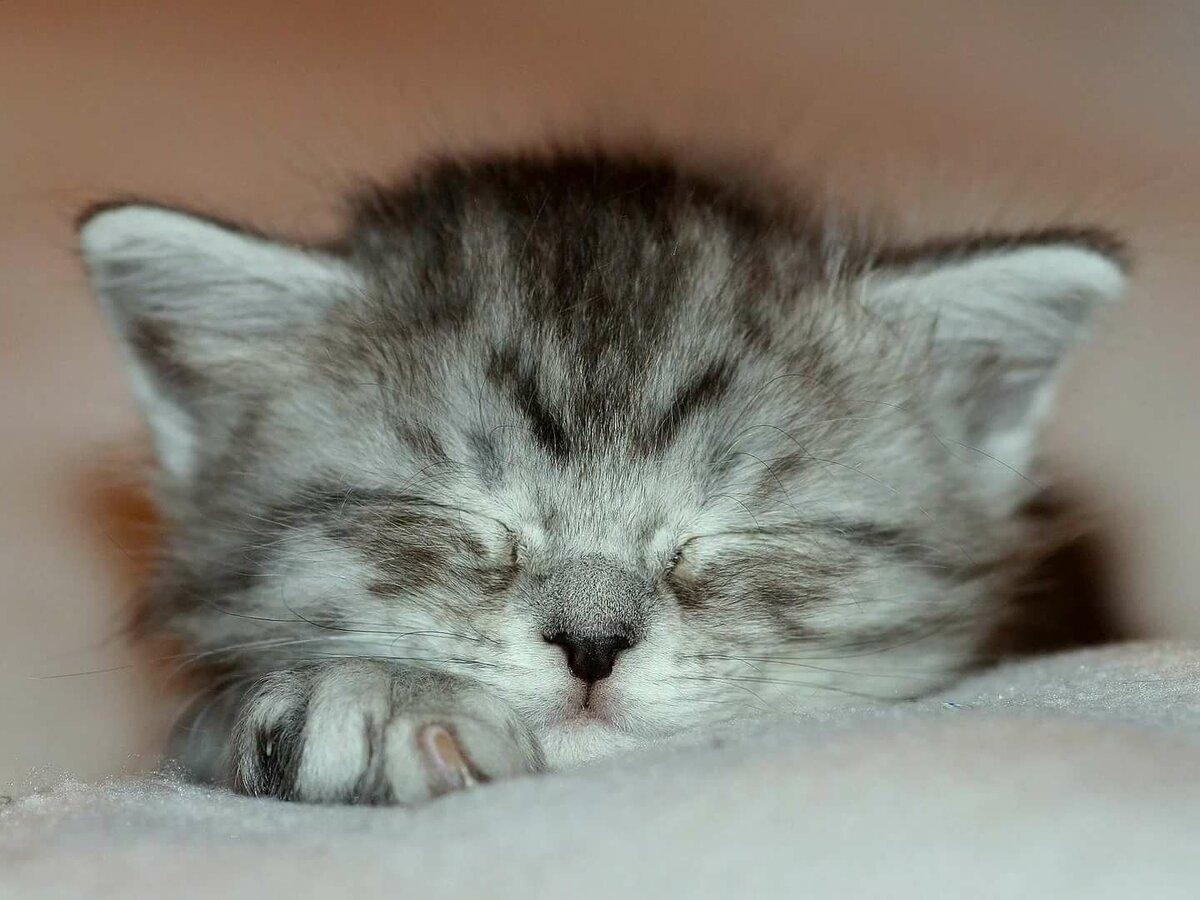 праздником картинки спящие котята стрижка требует особого