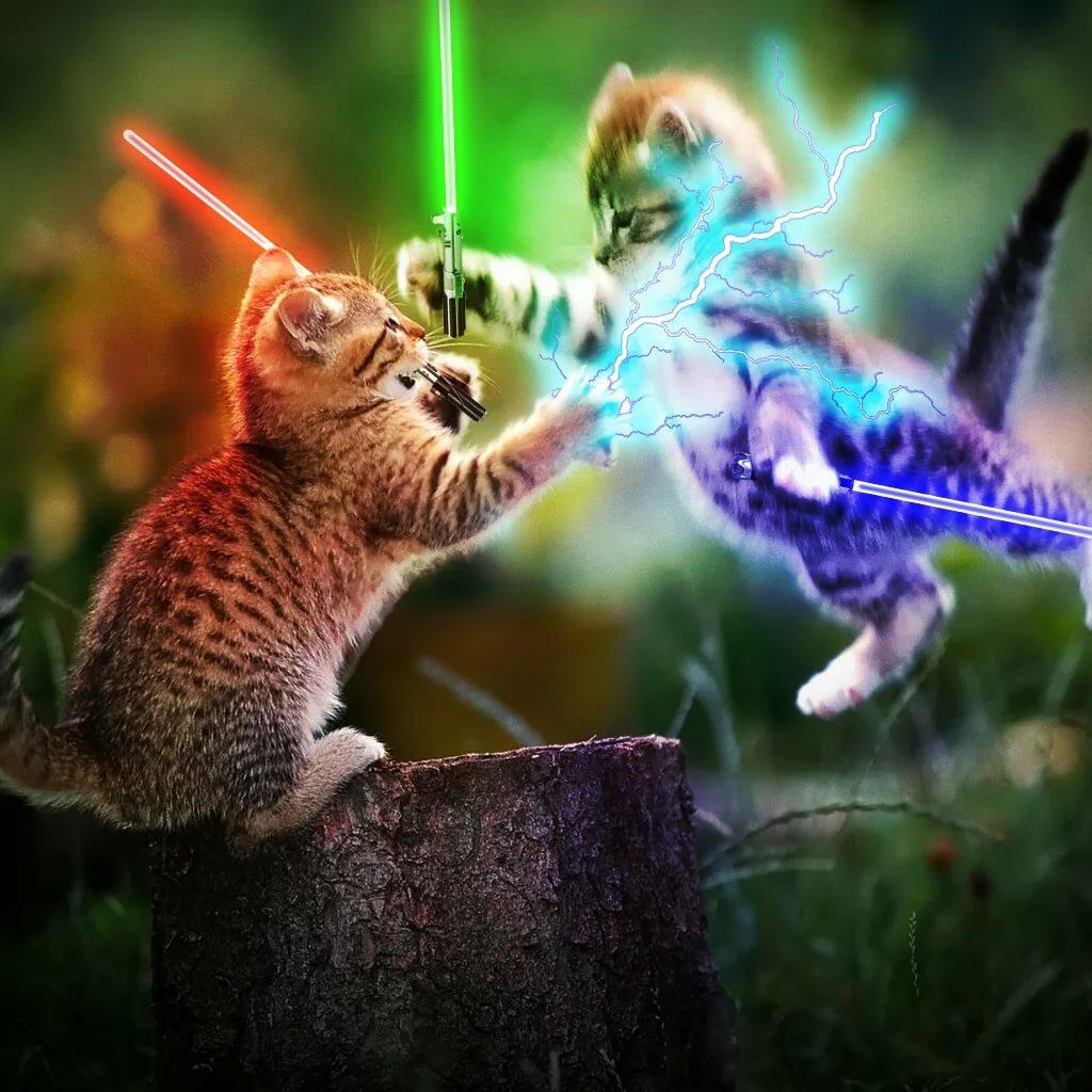 Кошек картинки с мечами