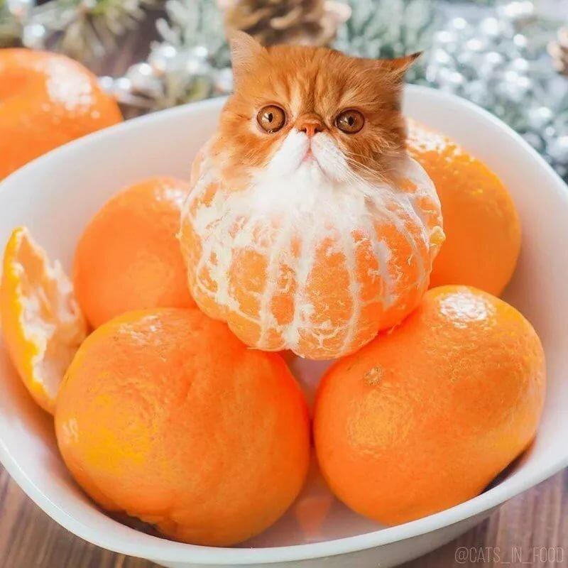 картинки котики с фруктами сведения радиолокационной