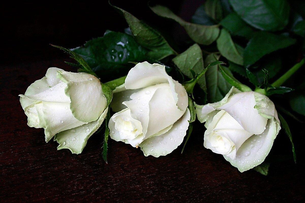 Белые розы открытка фото