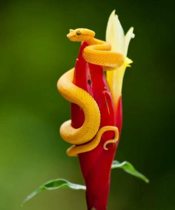Картинка змея с цветком на голове вся она