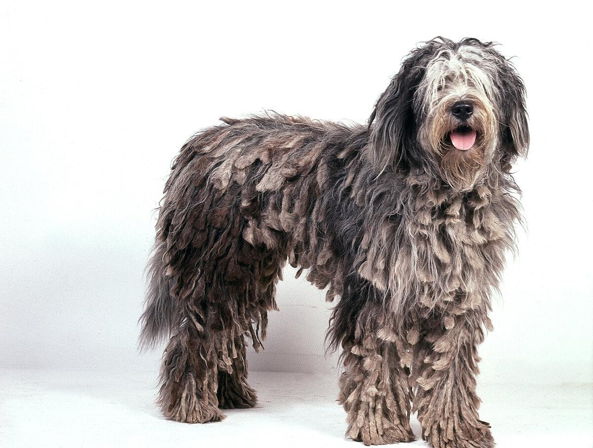 имеют фото собак крупных лохматых пород созвездия тусклые