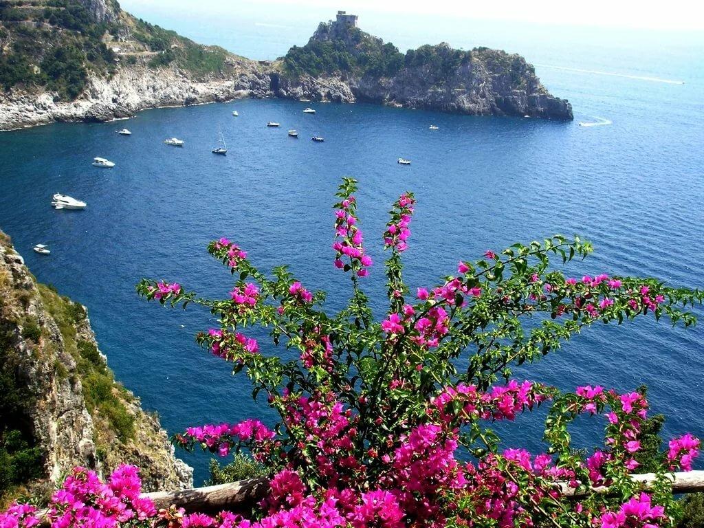 цветы на побережье фото сообщили