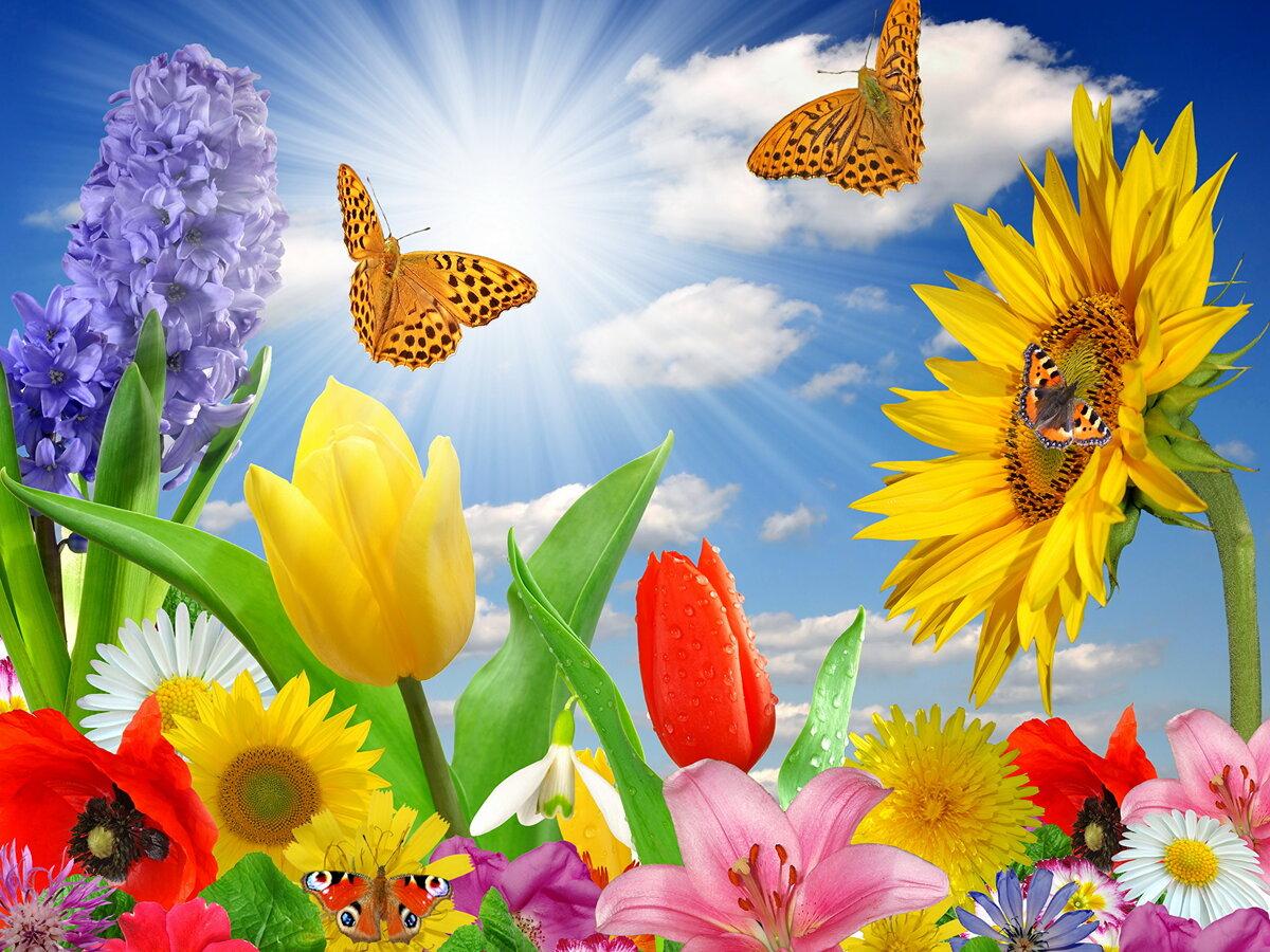 Днем поэзии, картинка цветочная поляна анимация