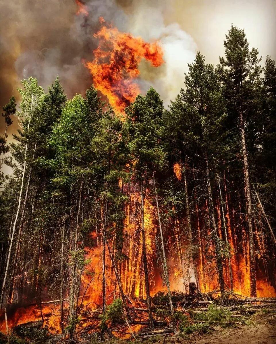 что картинки лесов в огне лук черного